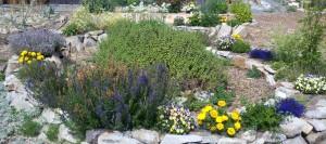 spiral herbs