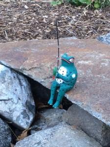 frog on rock